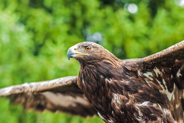 The Eagle and the Chickens: Uncovering Your True Identity